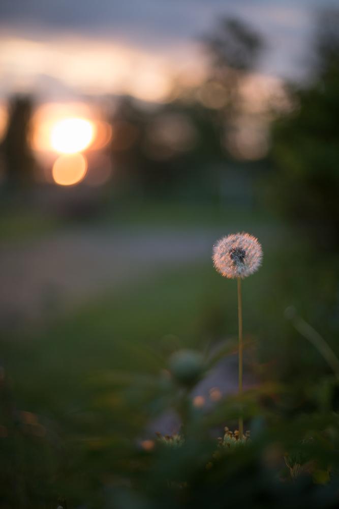 Solnedgång i Gärdebyn