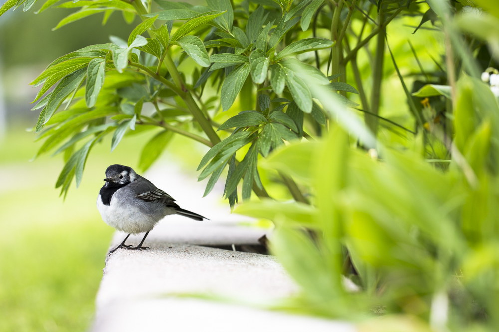 Småfågel funderar